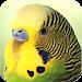 Download Parrots 1.6.4 APK