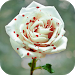 Download 30 Flores 1.0 APK