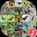 Download Appp.io - Thai Bird Sounds 1.0.3 APK