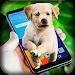 Download Dog On Screen - Funny Joke 1.11 APK