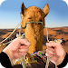 Download Drive Camel in Dubai 1.0 APK