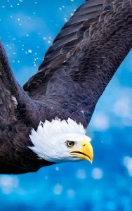 Download Eagle Live Wallpaper 200 APK