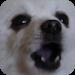 Download Gabe The Dog 1.33 APK