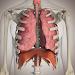 Download Human Physiology 1.0.1 APK