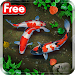 Download KOI Lucky Fish Live Wallpaper 1.0 APK