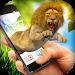 Download Lion in Phone Prank 1.9 APK