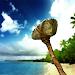 Download Survival Island Primal 1.03 APK