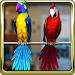 Download Talking Parrot Couple Free 1.3.7 APK