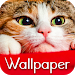 Download Wallpaper Cat Collection 1.1.9.1 APK